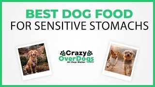 Best Dog Food For Sensitive Stomachs in 2020