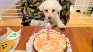 PUPPY'S FIRST BIRTHDAY PARTY!!