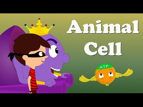 Animal Cell | #aumsum #kids #science #education #children