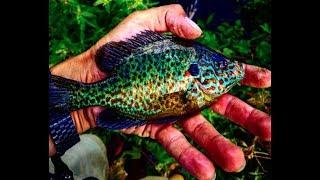 CATCHING WILD FISH FOR AQUARIUM!! Micro Fishing