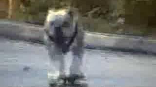 Really Funny Dog Videos