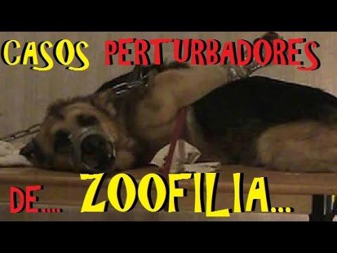 Top: Los 6 Casos de Zoofilia, más perturbadores de la historia.
