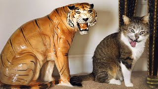 Funny Cats And Dogs Reactions  😆 Try Not To Laugh 😹