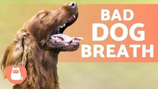 What to give a dog for really bad breath