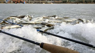 Форум зимняя рыбалка во владивостоке
