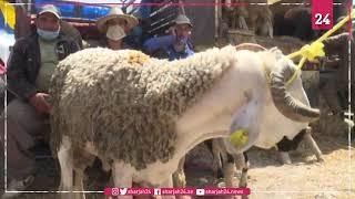 سكان بوادي المغرب يعلقون أملاً بتعويض خسائرهم عبر بيع أضاحي العيد