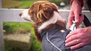 Hiking With Your Dog? Check Out This Waterproof Dog Coat / Jacket