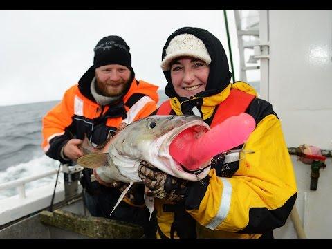 Utraditionelle agn til torsk