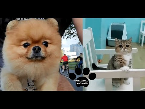 Original Animals #23. CUTE AND FUNNY ANIMALS VIDEO/ МИЛЫЕ И СМЕШНЫЕ ЖИВОТНЫЕ.