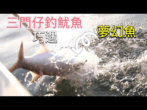 香港釣魚  大埔三門仔釣魷魚 巧遇夢幻魚 可能就是我們釣魚人所尋找的!