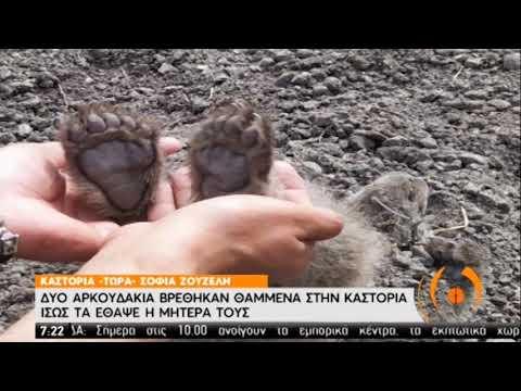 Μαμά αρκούδα έθαψε τα παιδάκια της σε χωράφι στην Καστοριά | 18/05/2020 | ΕΡΤ