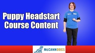 Puppy Headstart Course Content Family Dog Obedience