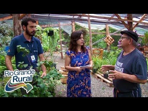 Como cultivar camélias - Rio Grande Rural