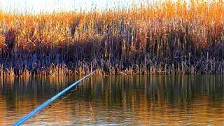 Про хорошую рыбалка на карася весной