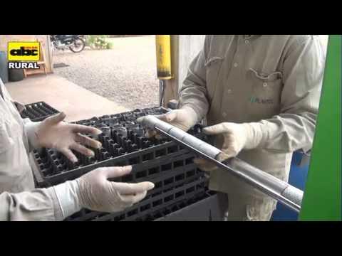El ungüento del hongo de las uñas en kitae