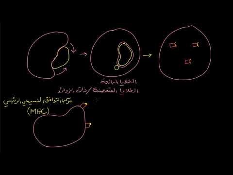 الصف العاشر الأحياء علم الأحياء البشري خلايا APC ومركبات MHC II