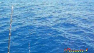 Fishing Tunas and Marlin on the Picante 40