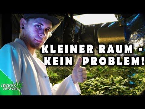 36 Cannabis-Pflanzen auf 1m²?!