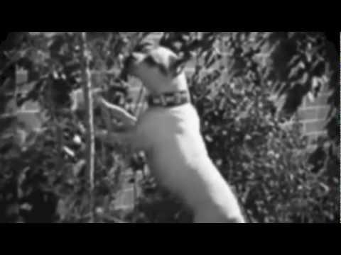 Saturday's Radio - Free For All - featuring Harold Lloyd