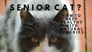 Senior Cat? Natural Remedies For A Quality Life