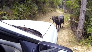 Angry Ram attacks a car