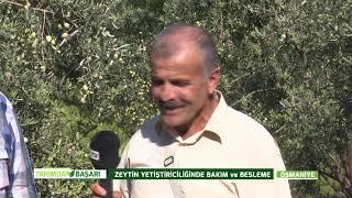 Tarımda Başarı | 21. Bölüm Osmaniye Zeytin Yetiştiriciliğinde Bakım Ve Besleme