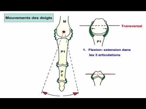 Du masseur du home-trainer pour les muscles de la personne lulu ultra