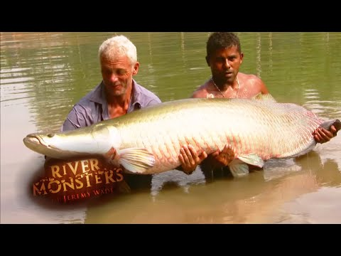 catching a giant arapaima river monsters
