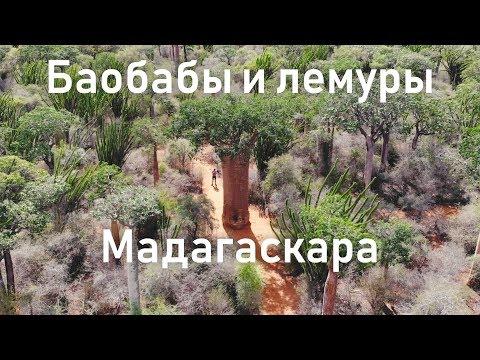 Русский на Мадагаскаре и достопримечательности Мадагаскара   Колючий лес   Африка   Алексей Рыжов