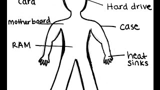 How similar a computer is to a human body