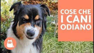 10 cose che i cani odiano delle persone – CURIOSITÀ sui cani