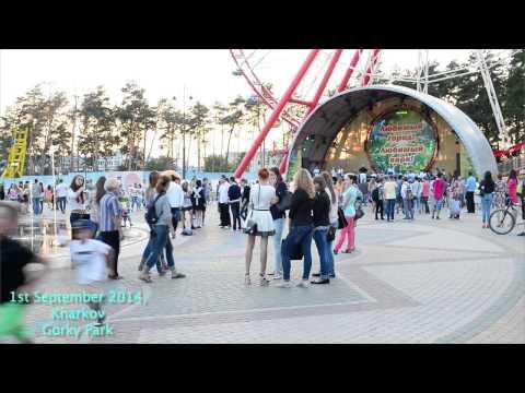 La pesca in video di regione di Odessa su una carpa