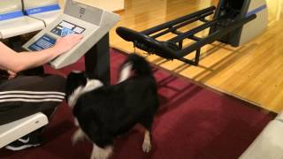 Crazy dog in bowling alley