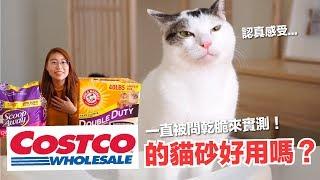 每次逛好市多都被問!Costco的貓砂到底好不好用?【好味貓開箱】EP14