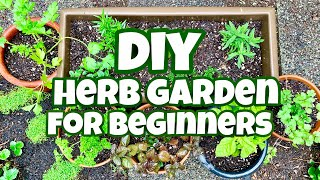 How To Plant an Herb Garden For Beginners- DIY Herb Garden #Stayhome #Withme