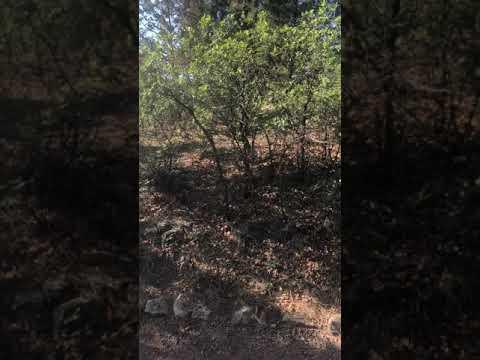Video Of Elk Ridge Campground, CO