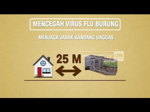 Video Cara Mencegah Virus Flu Burung
