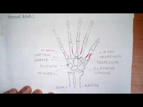 Muskelschmerzen im Rücken direkt unter dem Schulterblatt