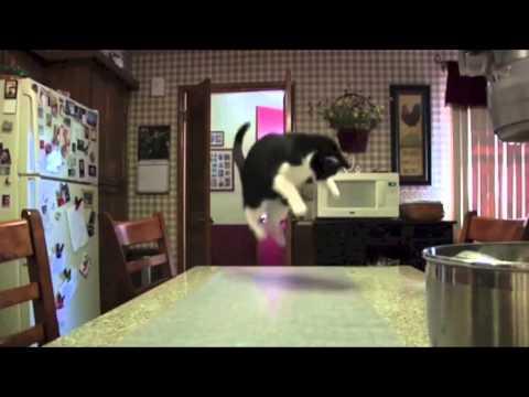 Alfombra Electrica para Gatos no se suban en encimeras mesas sofas
