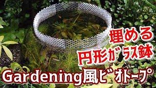 Gardening風ビオトープ円形ガラス鉢の追加花壇の中のメダカ