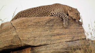 Fantastic wildlife on safari in Kenya 2013 part 1