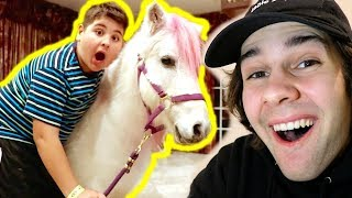 SURPRISING LITTLE BROTHER WITH A PONY!!