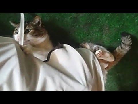 Vermi di gattini di una fotografia
