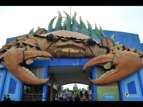 Video Serunya Berwisata Di Wisata Bahari Lamongan