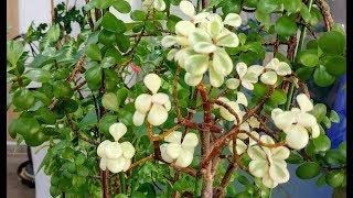 실내공기정화 식물들Indoor Air Purification Plants