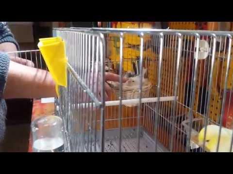 Siccome è a lungo possibile immagazzinare di chilocaloria su uova un verme nel frigorifero