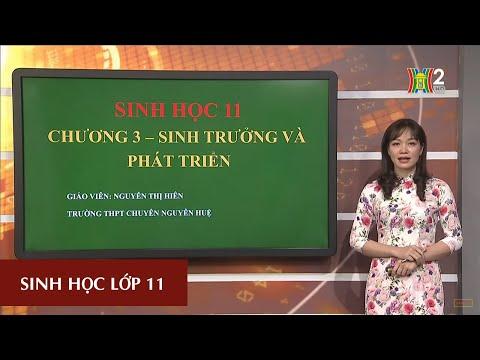 MÔN SINH HỌC - LỚP 11 |CHỦ ĐỀ: SINH TRƯỞNG VÀ PHÁT TRIỂN Ở THỰC VẬT| 16H30 NGÀY 11.04.2020 | HANOITV