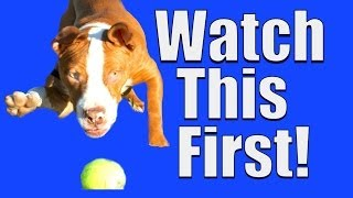 New Dog? Watch This FIRST!