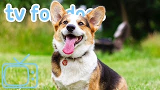 TV for Dogs! Chill Out and Enjoy Virtual Reality Dog Walks with your Dog!