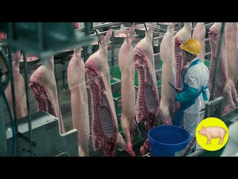 Inside the world's largest meat production plant ★ Awesome Food Processing Machines 2019
